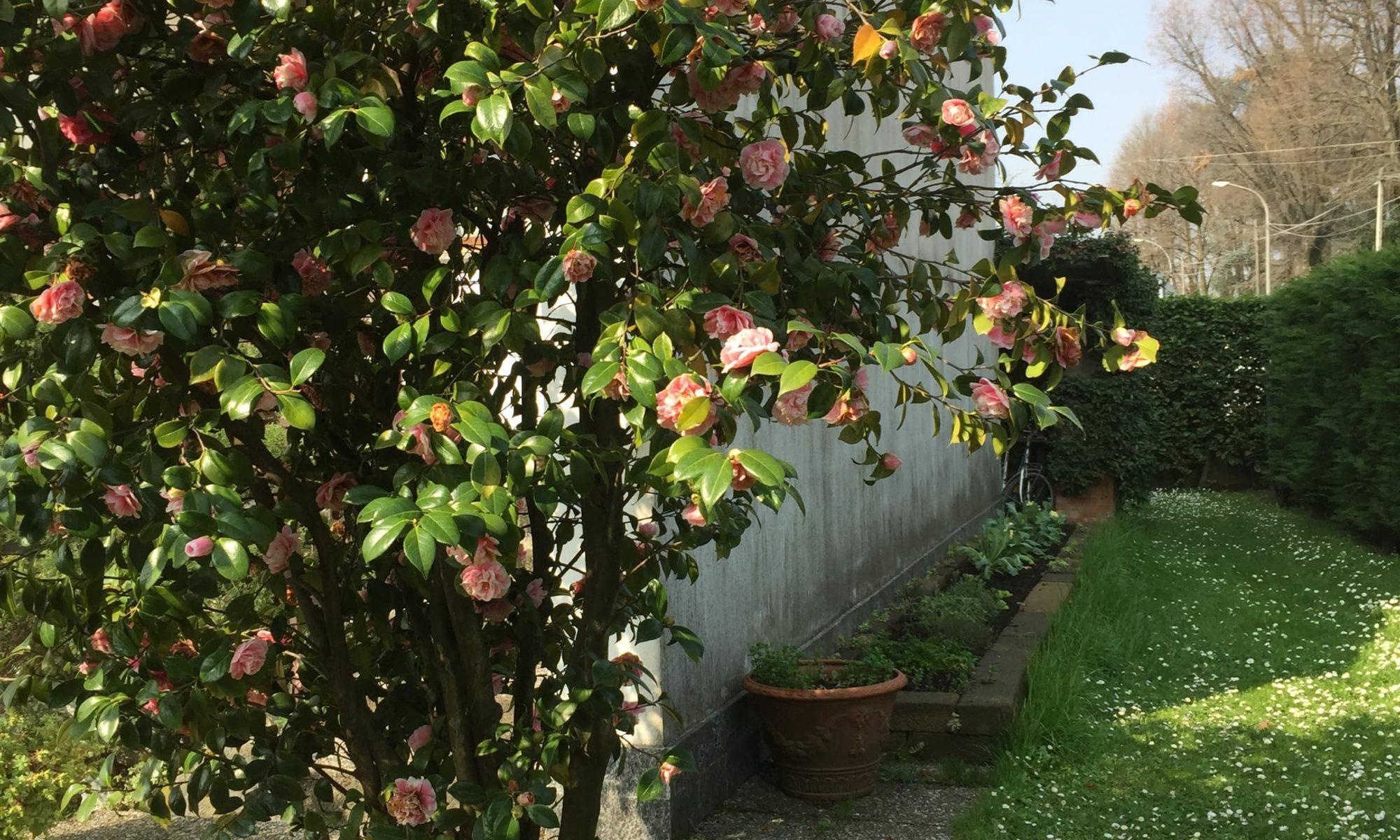 Rana B&B Ornago vista sul giardino laterale