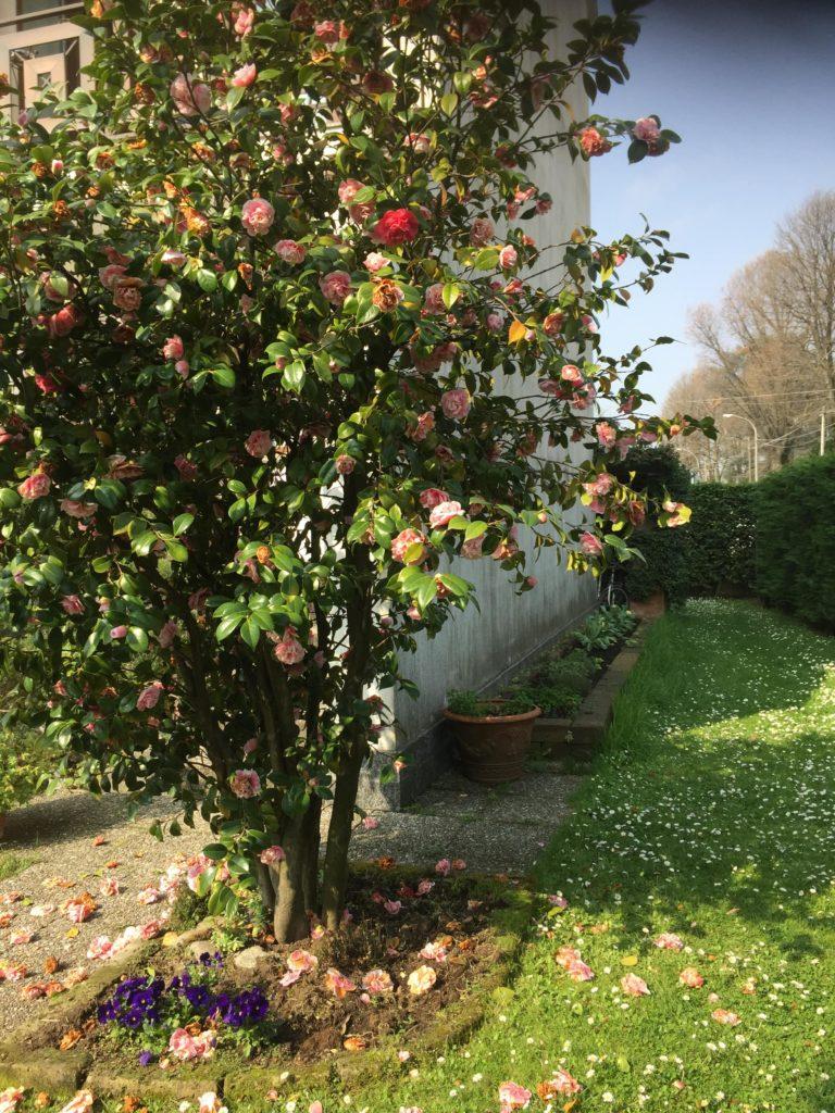 Rana B&B Ornago fronte laterale giardino